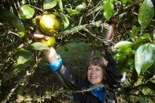 Di Celliers says she has no trouble finding pickers. Photo / Richard Robinson