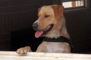 All efforts to find explosive detection dog Lucky have failed. Photo / Australian Defence Force
