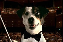 Spot, the Jack Russell terrier who starred in 90s Telecom advertising, the good old days of the telco's ads. Photo / File