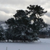 Snow covers hedges in Oxford, North Canterbury. Photo / Monese Ball