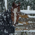 A horse wears a coat in the snow, in Oxford, North Canterbury. Photo / Monese Ball