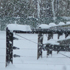 Snow falls creating a dreamy winter scene in front of a house in Oxford, North Canterbury. Photo / Monese Ball