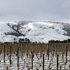 Snow on the Nga Waka a Kupe ranges and across the vines in Martinborough. Photo / Jeff Barber