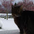 Oskar the cat checks out the snow in Oxford, North Canterbury. Photo / Monese Ball