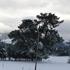 Snow blankets Oxford, North Canterbury. Photo / Monese Ball