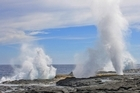 Spectacular blowholes erupt along the ocean coastline. Photo / Adrienne Kohler