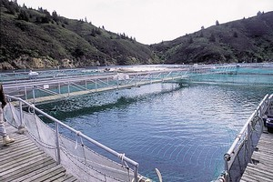 The New Zealand aquaculture industry had about $280 million of exports last year. Photo / Supplied