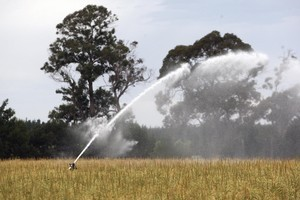 The Greens say money raised through irrigation charges would be partly invested in water quality measures. Photo / APN