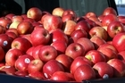 Australian MPs have once again been warned that a move to prevent the import of New Zealand apples is in breach of world trade rules. Photo / Glenn Taylor