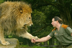 Zion Wildlife Gardens and its handler, Craig Busch (pictured), became world-renowned through the 'Lion Man' television series. Photo / Brett Phibbs