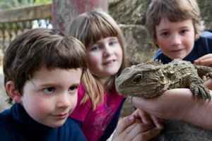Jeremy, older brother Christopher and Imogen Gadd get a close look at a tuatara. Photo / Richard Robinson