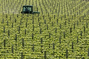 The wine industry is in a much better position than it was three years ago. Photo / Alan Gibson