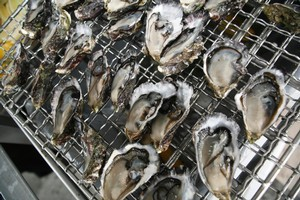 Bluff oysters will still be available during the Rugby World Cup thanks to a one-off season extension. File photo / NZ Herald