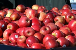 Apples were one of the few commodities to rise in price against a prevailing downward trend. Photo / APN