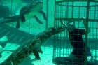 Robin Esrock was lowered into a pool of crocodiles in Cargo Wildlife, Oudtshoom. Photo / Ana Alheiro