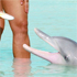 A patriotic Australian feeds a gentle female dolphin at Monkey Mia. Photo / Supplied