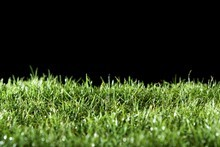 Your lawn is your quickest and best shot at creating a big impact in the garden this season. Photo / Thinkstock