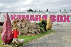 The Kumara Box, Dargaville. Photo / Supplied