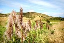 Te Henga Walkway, also known as the Hillary Trail, runs from Muriwai to Te Henga (Bethells). Photo / Natalie Slade