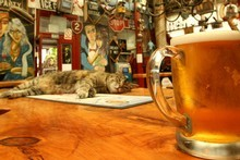 The wonderfully bizarre interior of Smash Palace Bar in Gisborne. Photo / Alan Gibson