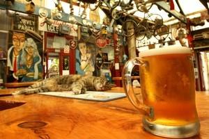 The wonderfully bizarre interior of Smash Palace Bar in Gisborne. Photo / Alan Gibson