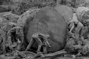 Using the right methods can save you the heavy lifting. Murray Family Photo / Kauri Museum, Matakohe
