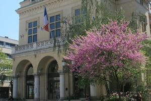 Blossom befits the splendour of Paris. Photo / Supplied