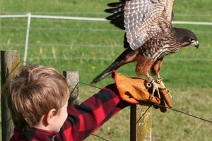 Poster girl Millie (or Millennium) will happily sit on the hand of visitors to the Wingspan Bird of Prey Centre in Rotorua. Photo / Alex Tully