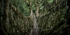 View: India's tree root bridges