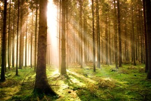 Is 'forest boy's story really true? Photo / Thinkstock