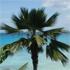 Hawksbill Beach, Barbados. Photo / Rick McKinley