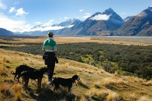 A shepherd and his dogs have a spectacular view of the surrounding Southern Alps. Photo / Sarah Ivey