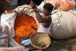 A vendor weighs a purchase of marigolds at Kolkata's Malik Ghat flower market. Photo / Jill Worrall