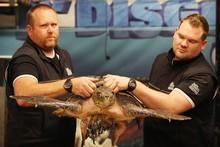 Andrew Christie and Matt Harvey of Kelly Tarlton's, with the olive radley turtle. Photo / Greg Bowker