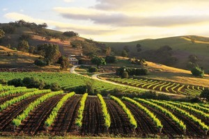 Bethany Wines in the Barossa Valley, South Australia. Photo / Supplied