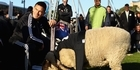 Watch: Sonny Bill meets 'Sonny Wool'