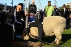 New Zealand All Black Sonny Bill Williams met 'Sonny Wool', a sheep who has predicted all All Black victories at the World Cup so far, at a public event attended by thousands of All Blacks fans in Wellington.