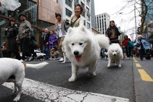 Pets and their owners parade to St Matthew-in-the-City. Photo / Richard Robinson