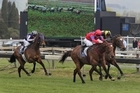 Jimmy Choux, ahead of Hold It Harvey, races up to Red Ruler (rails) on his way to winning the NZ Bloodstock Insurance Spring Classic at Hastings. Photo / APN
