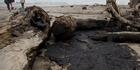 View: Rena oil spill: Shocking readers' photos