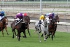 No Excuse Maggie (the grey) at the Matamata Cup on Saturday. Photo / Supplied