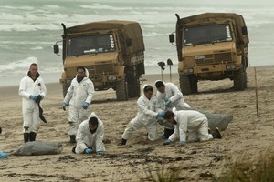 Soldiers pick clumps of oil off Papamoa Beach yesterday as the spill from the Rena continues to wash up on Bay of Plenty beaches. Photo / Alan Gibson