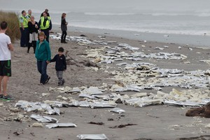 Meat packs from containers are scattered across the shore from the Rena. Photo / Mark Mitchell