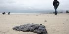 View: Rena oil spill: Coastline in strife
