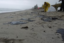 Locals are out cleaning up the oil despite warnings from Maritime New Zealand. 