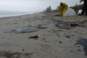 Locals are out cleaning up the oil despite warnings from Maritime New Zealand.  Photo / Cassandra Mason