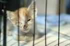 A man who bashed and burned a kitten in front of his five-year-old granddaughter has been named in the SPCA's &quot;List of Shame&quot;.