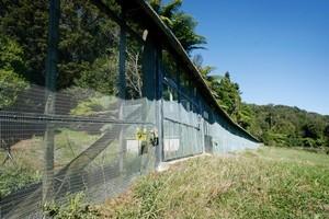 A predator-proof fence. Photo / Christine Cornege