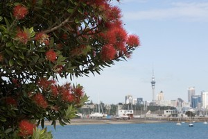 Is a compact city a realistic expectation for all of Auckland? Photo / Paul Estcourt
