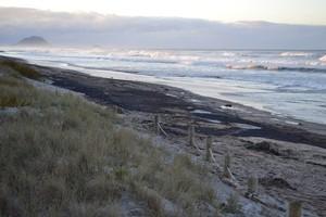 The oil slick washes up on Papamoa Beach. Photo / Naomi Willis